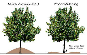 Say No to Volcano Mulching!