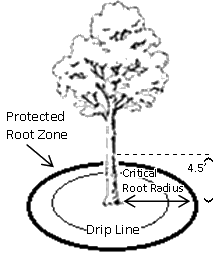 Question dripline on mature trees think